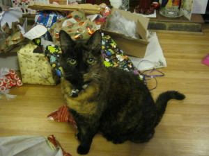 Christmas past - Biscuit inspects the presents